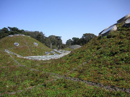 Academy of Sciences 'Living Roof'