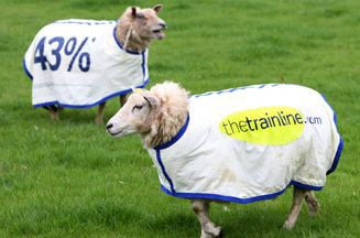 thetrainline_sheep