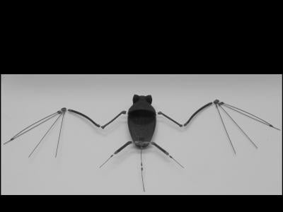 The NCSU robobat. Credit: Gheorghe Bunget