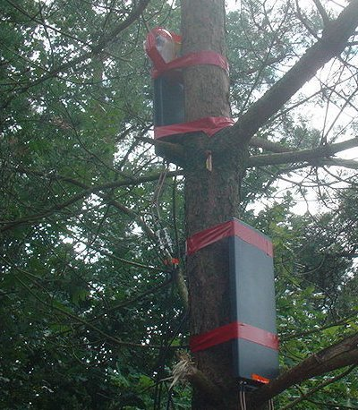 Base stations in trees
