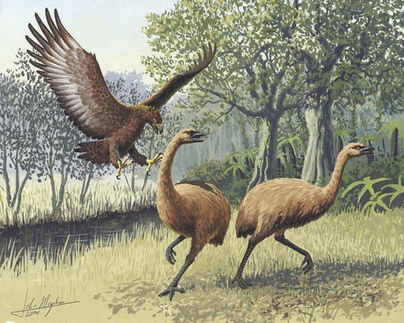 Haast's eagle attacking moa. Art: John Megahan
