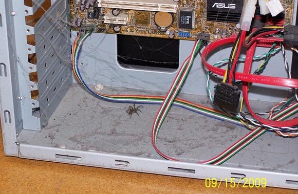 Live spider inside PC case
