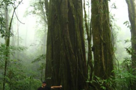 Tree sampling in the Monteverde cloud forest. Credit: Jorge Porras