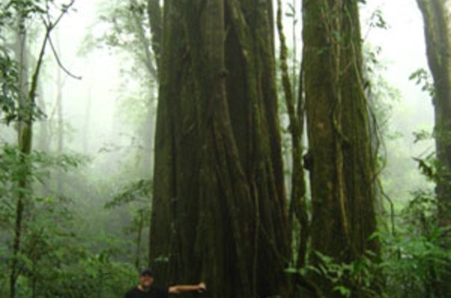 Tree sampling in the Monteverde cloud forest. Credit: Jorge Porras