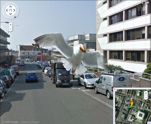 Seagull caught in flight in Brighton