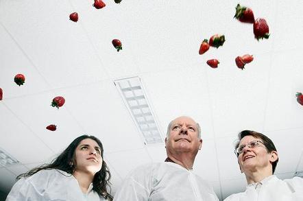 Strawberries suitable for growing in space. Credit: Purdue University