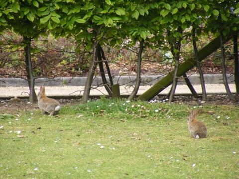 Microsoft rabbits