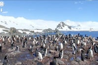 Google Street View penguins