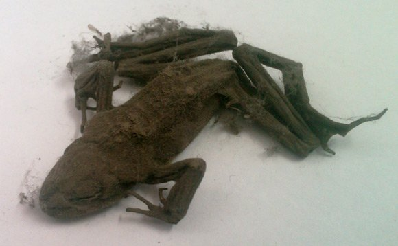 Mummified frog found inside PC, snapped by David McCauley