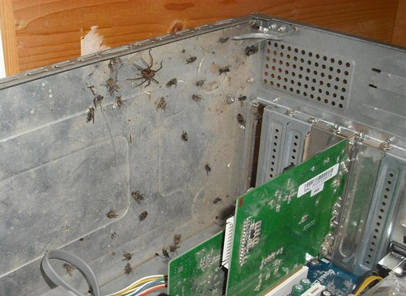 Dead flies and spider inside PC