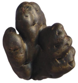 Puma Maki potato. Pic: Asociacion ANDES