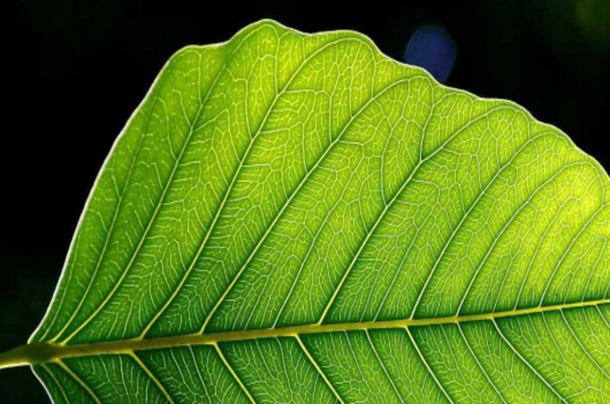 Растение видное а имя обидное 5 б 1 фотография