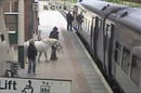 The man and his pony on the platform at Wrexham station