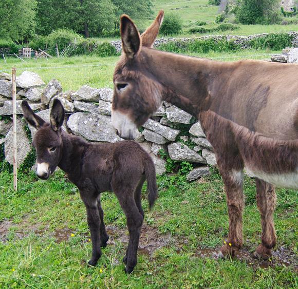 Reg hack's new jenny poses with mum