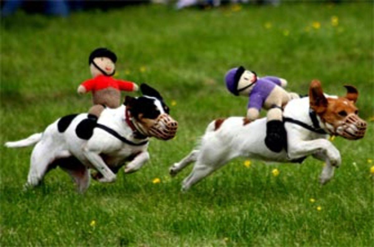 betfair racing