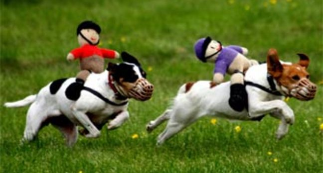 Rspca Knitting Patterns For Dogs : Exposed: RSPCA drills into cops databases, harvests private info   The R...