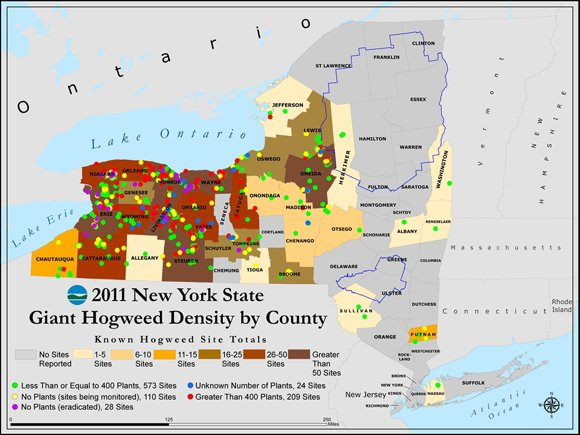 Map of giant hogweed distribution on New York State. Pic: DEC