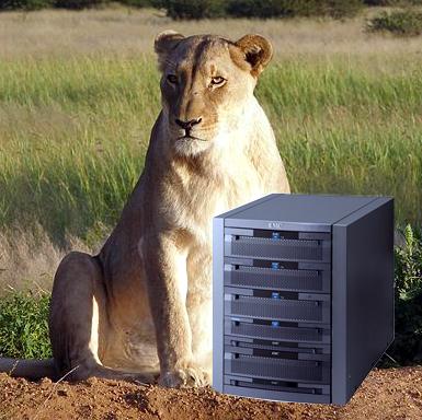 Lioness with Celerra