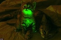 glow in the dark cat could cure aids
