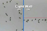 Laser-based 'light wall' repels mosquitoes