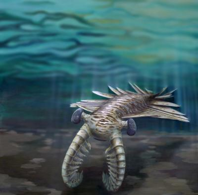 Artist impression of Anomalocaris