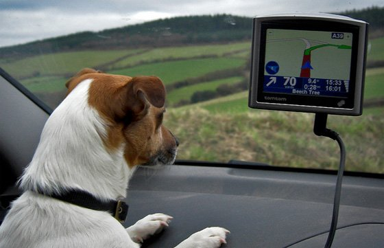 Dog using a satnav, Mark Robinson