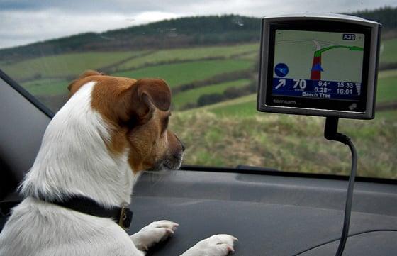 Dog using a satnav, Mark Robinson