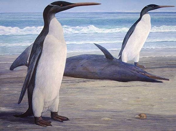 Two Kairuku penguins come ashore, passing a stranded Waipatia dolphin