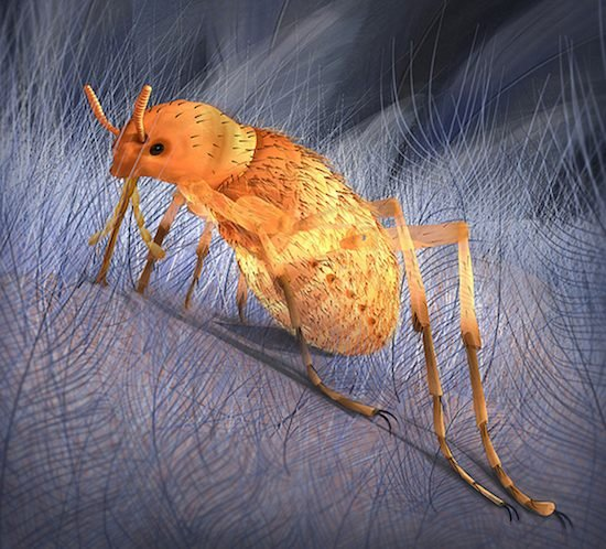 Illustration of prehistoric flea