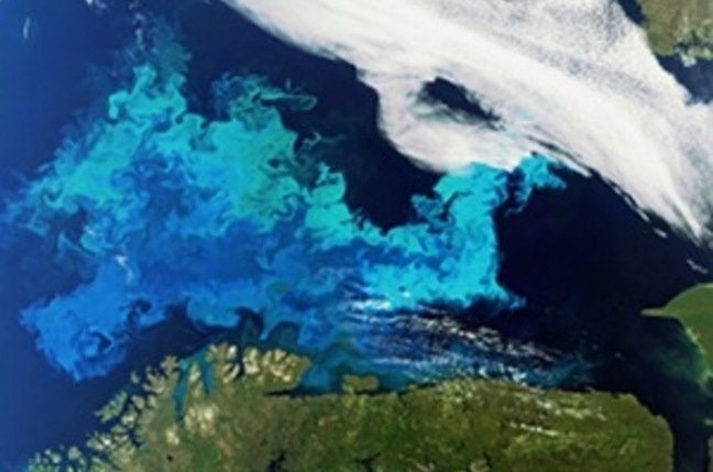 Phytoplankton bloom captured by Envisat
