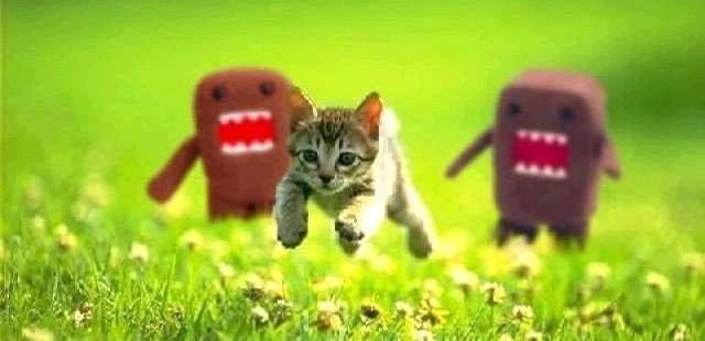 Kitten on the run