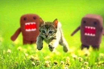 Kitten on the run