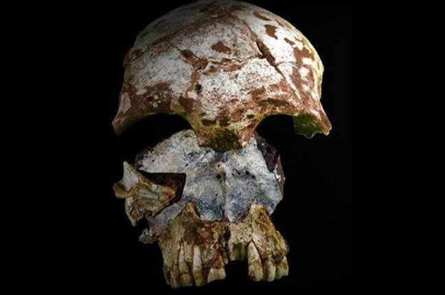 Ancient skull found in cave in northern Laos
