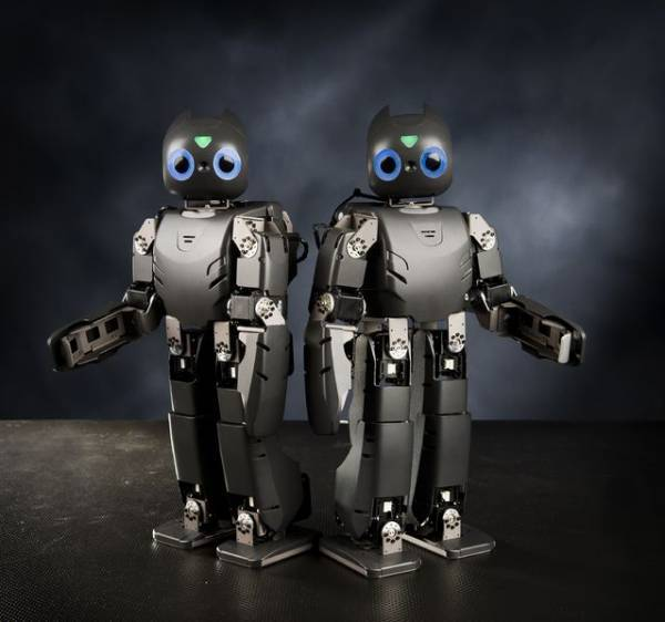 The DARwIN robot