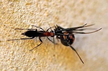Ocker CANNIBAL DEATH SPIDERS invade Japan! • The Register