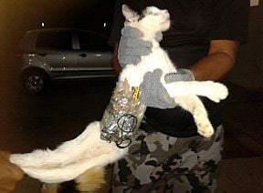 The nabbed cat with the contraband strapped to its body