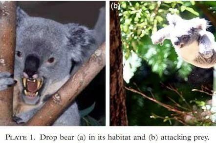 Drop bears: Australia's most deadly creature