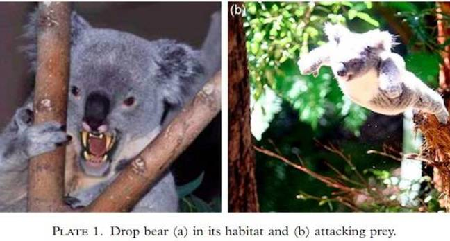 Drop bears: Australia's most deadly creature