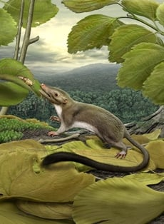 Artist's rendering of placental mammal ancestor