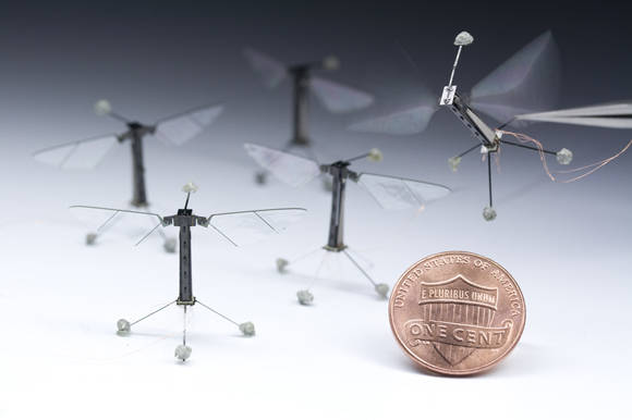 The 'RoboBee' created at the Wyss Institute for Biologically Inspired Engineering at Harvard University