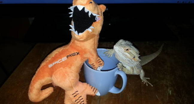 Bearded dragon handing out with Spicerex