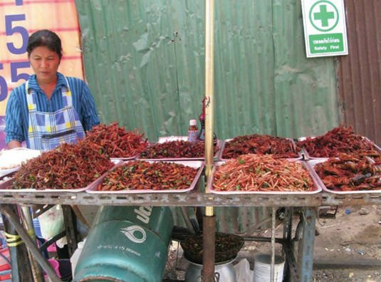 A variety of insects for sale as street food in Bangkok, Thailand
