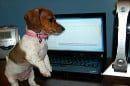 Puppy playing by computer