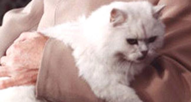 Blofeld's white cat