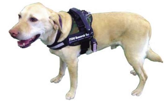 Google Glass FIDO dog project