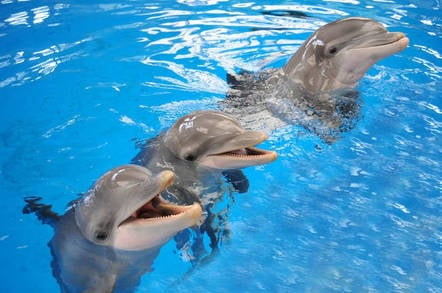 Dolphins can remember each other's signature whistles after 20 years