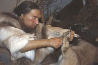 Neanderthal display in museum