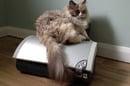 Cat on inkjet printer