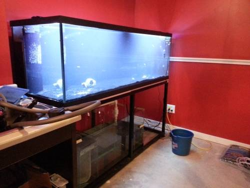 eGeek fishtank freshly installed