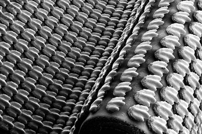 A microscopic view of the biometric shark skin. Pic: James Weaver